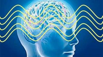 cerveau-integre477x265